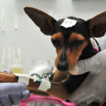 Yglésio solicita a criação de conselho de proteção aos animais