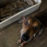 Yglésio sugere criação de canal de denúncias contra maus tratos a animais